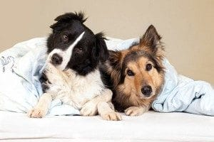 Pet Friendly Apartments in Fayetteville